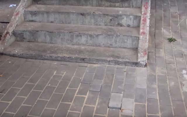 Perra embarazada enterrada bajo la acera
