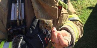 Ardilla es salvada por bomberos