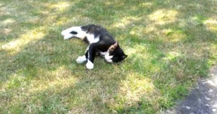 gato-alerta-a-su-familia-sobre-un-intruso-3