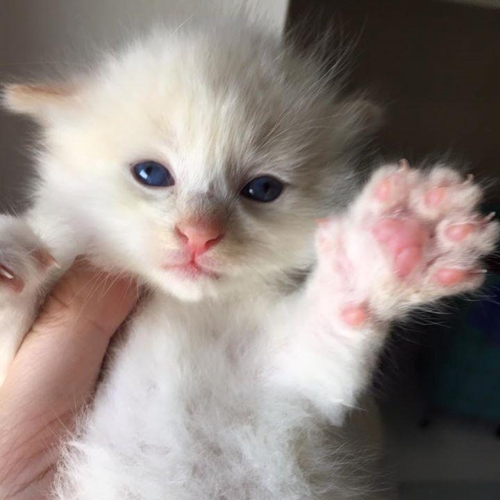 gato-recién-nacido-es-rescatado-por-bomberos-4