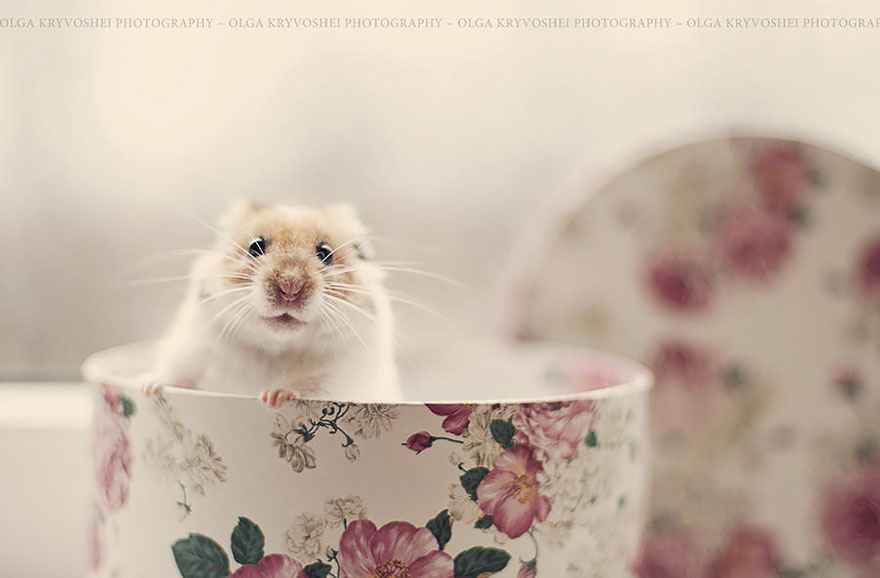 hamsters-muy-adorables-3