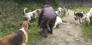 Mujer rescata a un zorro
