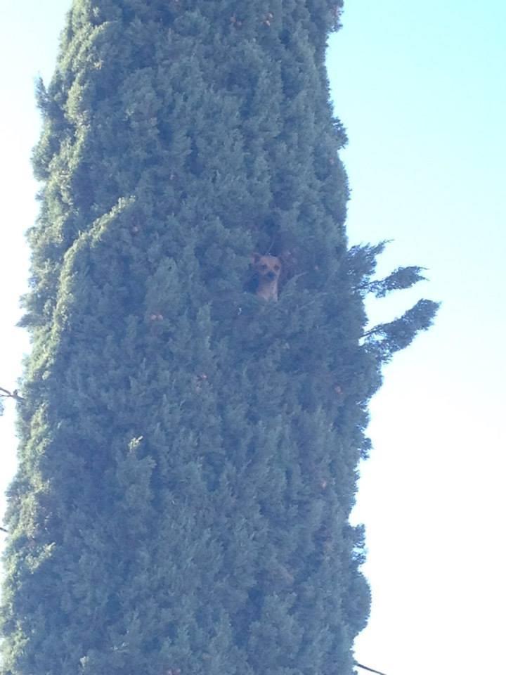 perra-atrapada-en-un-árbol-1
