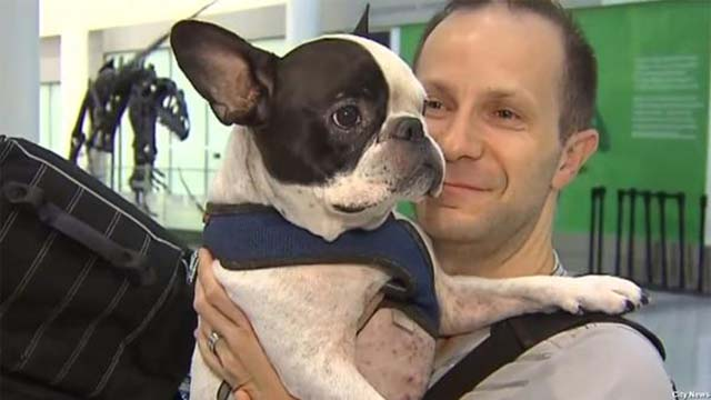 piloto salvó la vida de un perro al desviar un vuelo