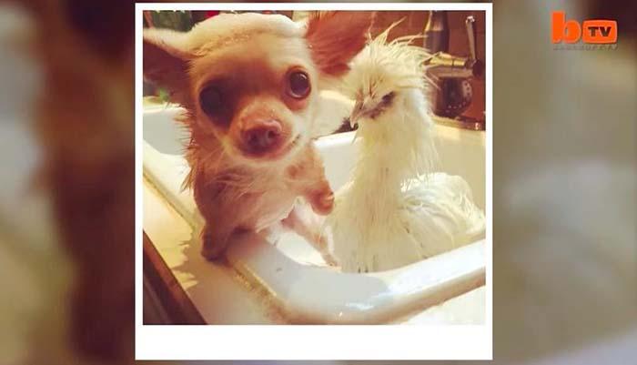 pollo-y-perro-rescatados-2