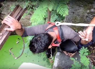 rescatan pequeño cerdo a punto de ahogarse en un pozo