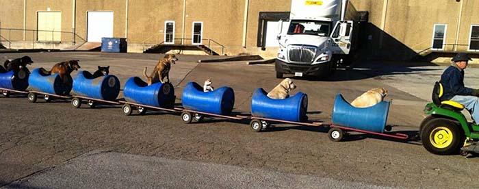 tren-para-pasear-a-sus-perros-3