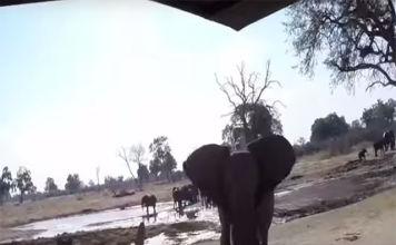 gran susto en un safari africano