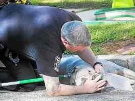 bomberos salvaron a un pit bull en un incendio