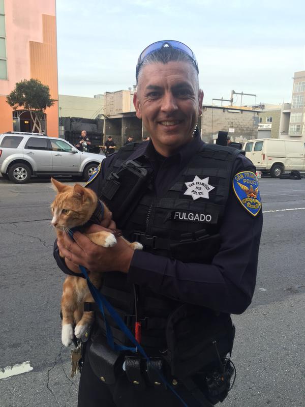 gato salvó a su humano de suicidarse