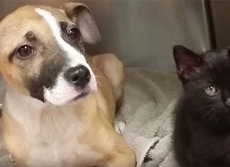 Un gato y un cachorro sobrevivieron dándose abrigo