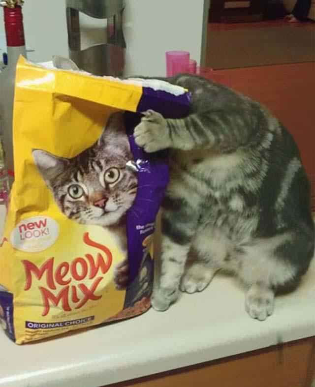 Fotos de gatos en el momento exacto