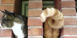 Fotos de gatos captadas en el momento exacto