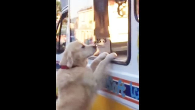Perro consigue su propio helado