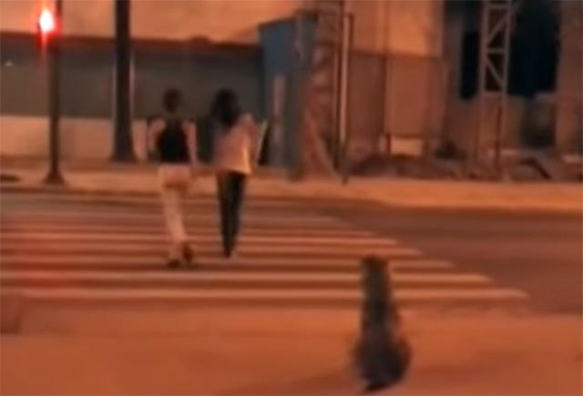 Perro cruza la calle respetando el semáforo
