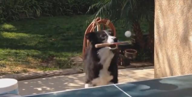 perro-juega-pingpong