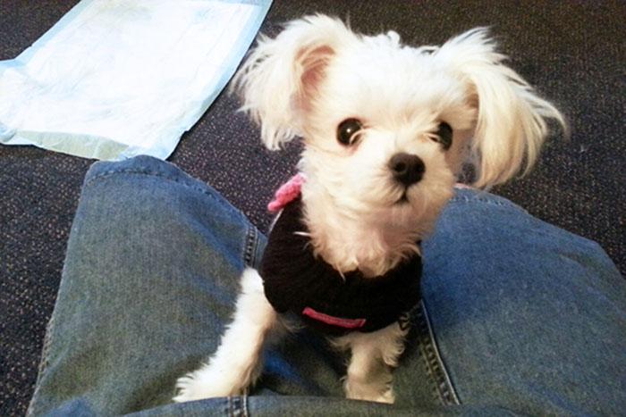 Charlotte adoptada