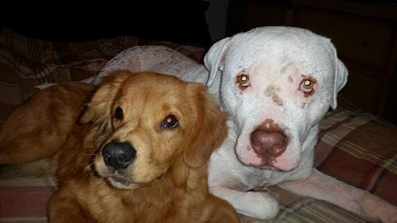 Mojo y su hermano