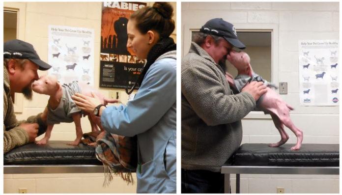 Pit bull rescatado no para de besar al hombre que lo salvó