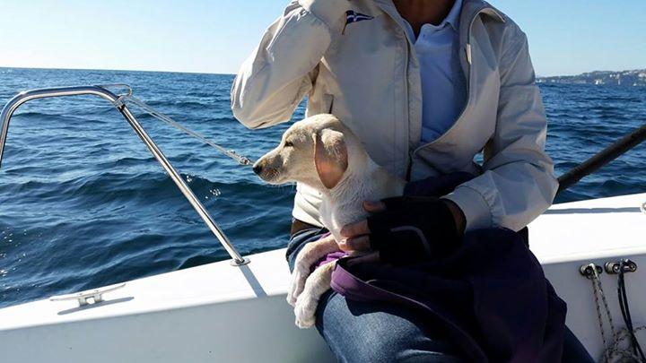 cachorro-rescatado-en-medio-del-mar