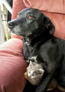 dos-perras-adoptan-gatito-recién-nacido-2