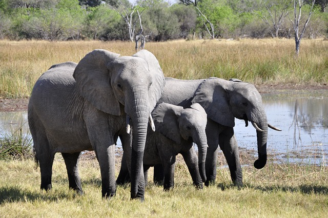 elefantes en África