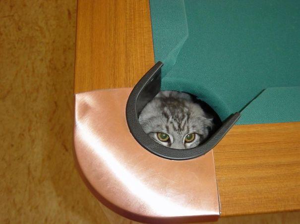 gatos-lamentan-haber-cometido-errores-1