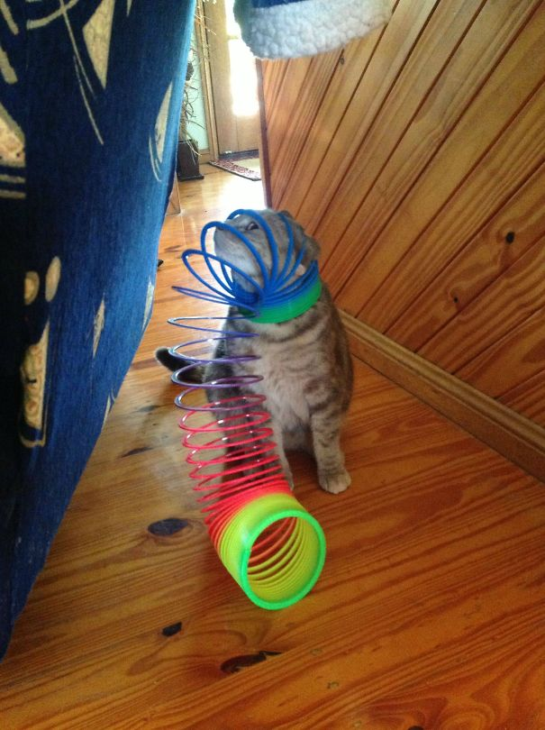 gatos-lamentan-haber-cometido-errores-10
