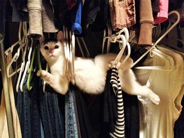 gatos-lamentan-haber-cometido-errores-11