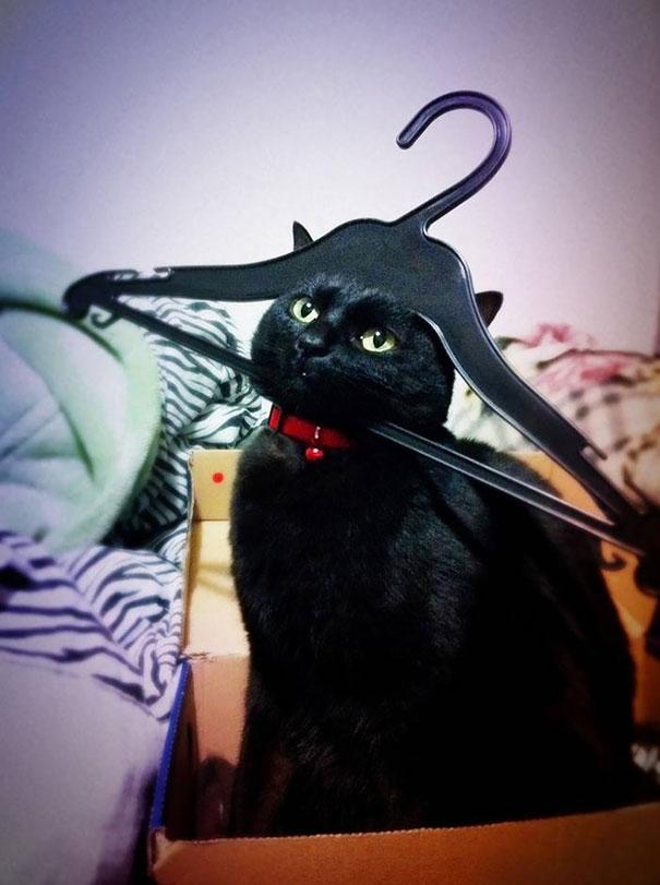 gatos-lamentan-haber-cometido-errores-14