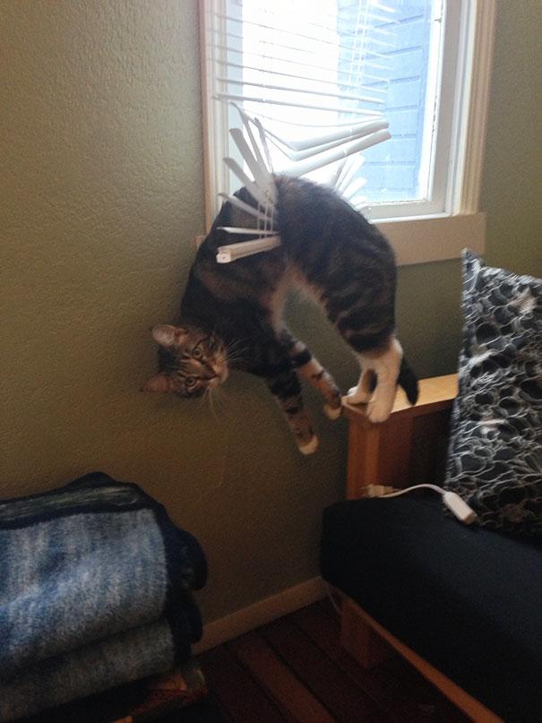 gatos-lamentan-haber-cometido-errores-2