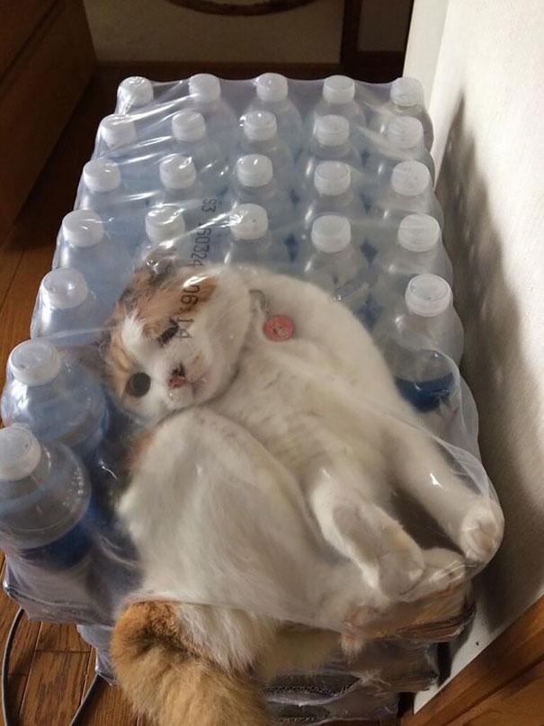 gatos-lamentan-haber-cometido-errores-6