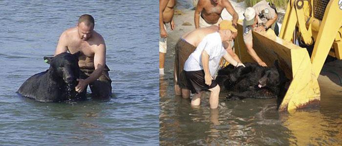 hombre rescata a un oso a punto de ahogarse