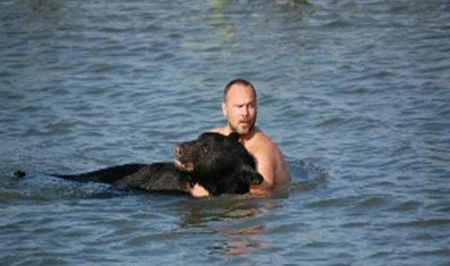Hombre salva a un oso de 400 libras de ahogarse