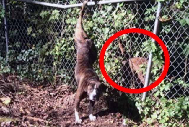 perra atrapada en una valla su amigo nunca se separó de ella