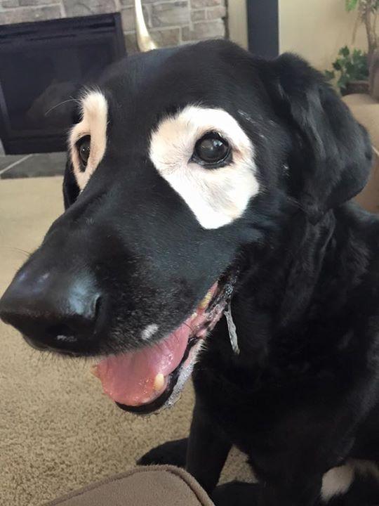 perro con extraña condición en los ojos