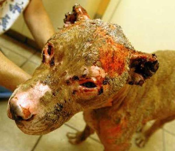 perro quemado vivo