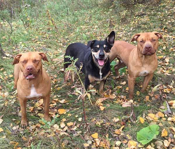 perros-querían-jugar-con-puercoespín