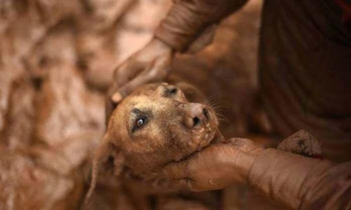 Perros rescatados en un devastador derrumbe en Brasil