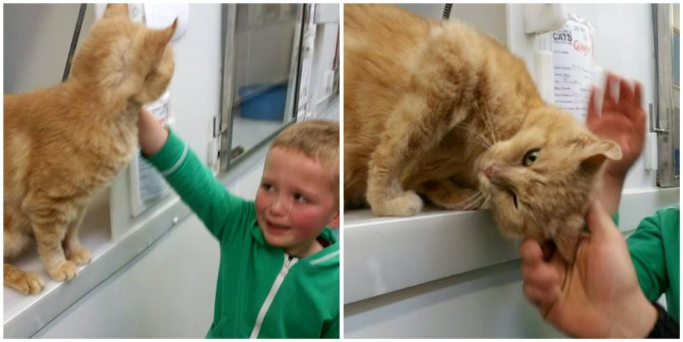 reacción-de-un-niño-encuentra-gato-1