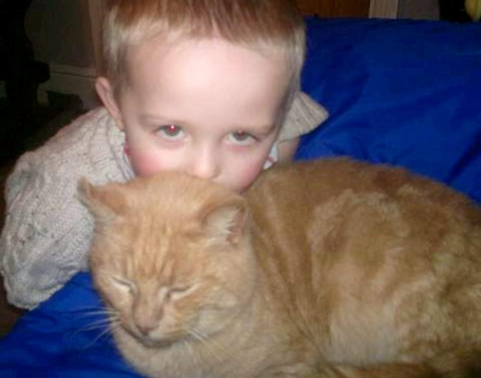 Reacción de un niño al encontrar a su gato
