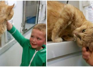 Reacción de un niño cuando encuentra a su gato perdido
