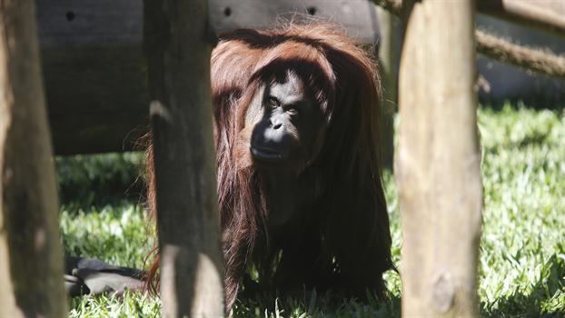 sandra-orangután-persona-no-humana-portada