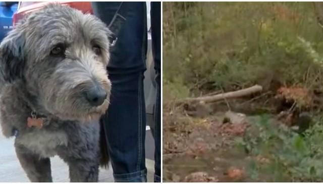 Su humana se perdió en el bosque y la perra fue por ayuda