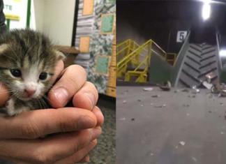 gato a punto de morir en un centro de reciclaje