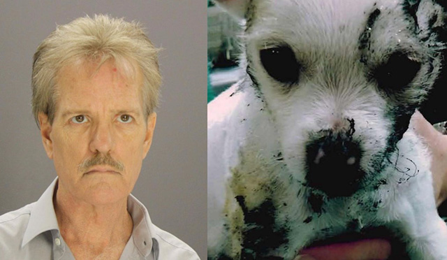 hombre que quemó a su cachorro en la estufa fue sentenciado