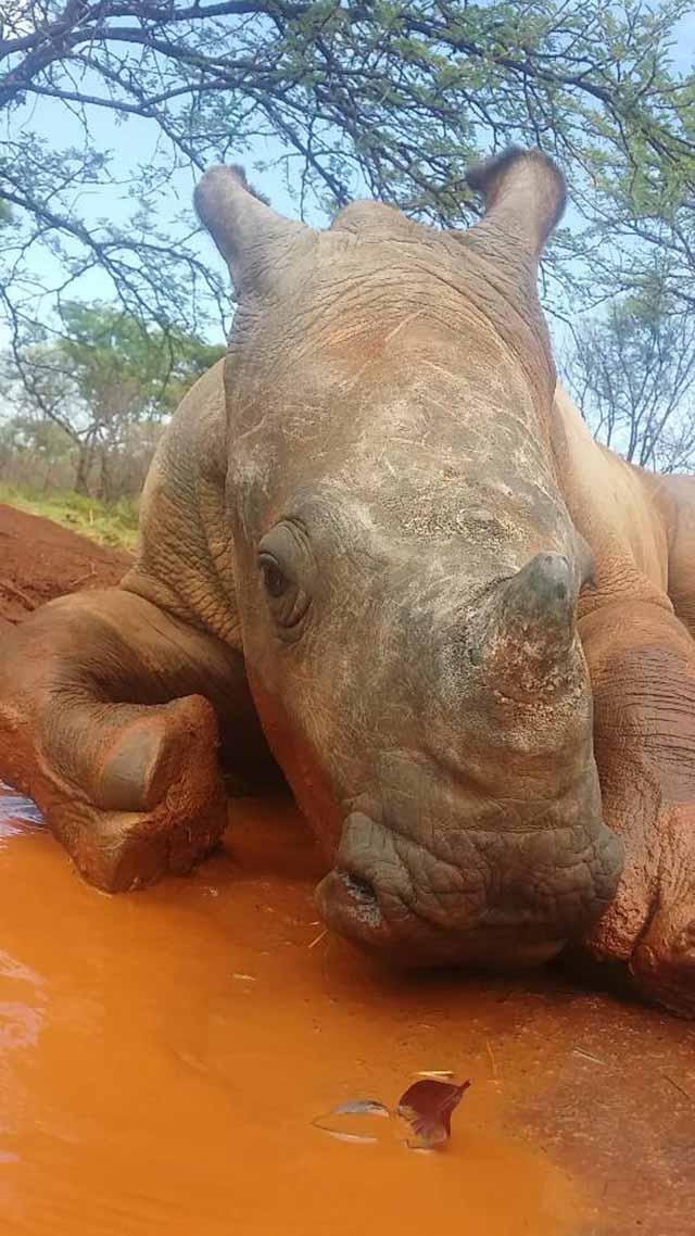 kabelo el rinoceronte