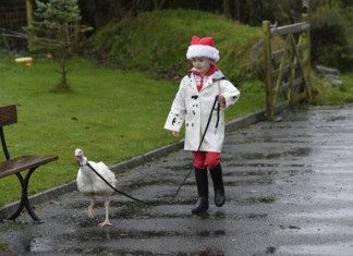 niña sólo deseó adoptar un pavo esta navidad