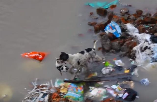 perra salva a sus cuatro cachorros en una innundación