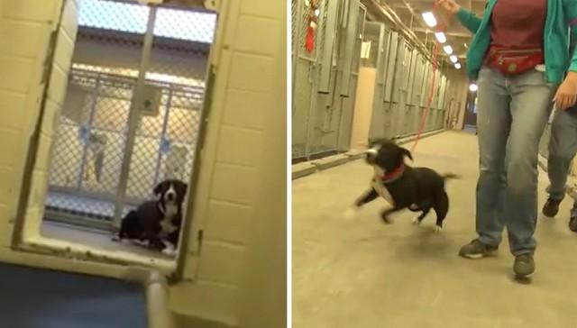 perro demuestra mucha felicidad al ser adoptado